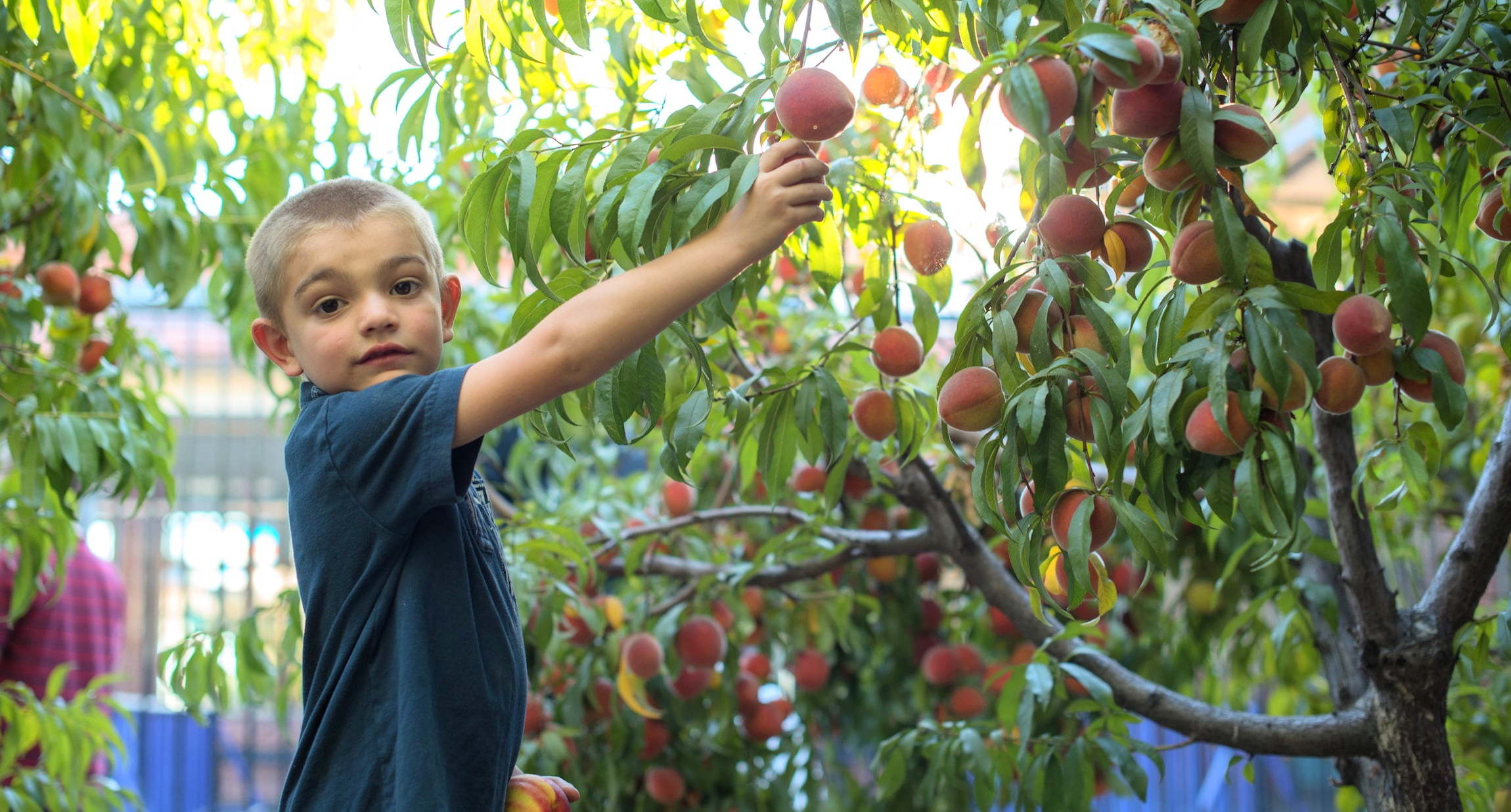 Common VIsion School Orchard Peach Pick